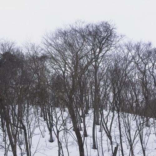 2017_3_9_04.jpg